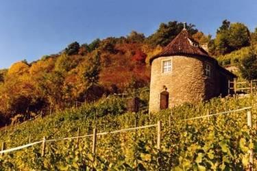 Weinberg am Saale-Weinwanderweg