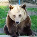 Tierpark_Bad_Koesen_-_Baer.JPG