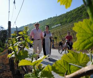Saale-Weinwanderweg
