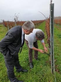 Oberbürgermeister, Bernward Küper, mit Stephan Herzer bei der Besichtigung einer Weinrebe im Weinberg ©Stadtverwaltung Naumburg (Saale)