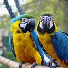 Tierpark_Bad_Koesen_-_Papageien.JPG