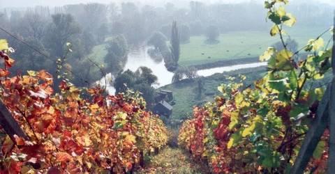 Wein_Herbst.jpg
